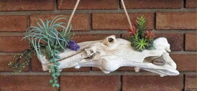 Ideas to arrange your succulent with driftwood 23